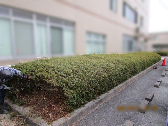 岡山県和気町 植栽伐採工事